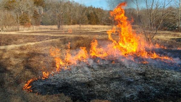 EMM Wetland burn