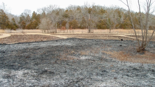 EMM Wetland post-burn