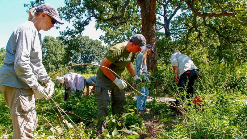 KWS volunteers clearing tree saplings and grapevines.jpg
